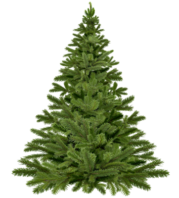 PNG images Christmas Tree (5).png