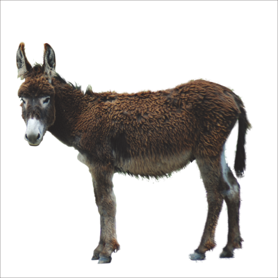 PNG images Donkey (18).png
