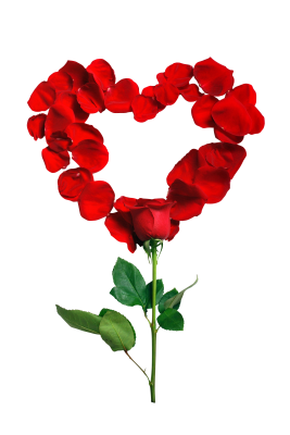 Rose-1215314 PSD file with small and medium free transparent PNG images
