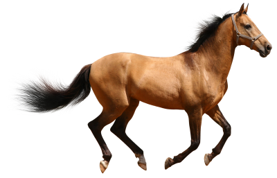 Horse, Brown, Isolated, Runs, Brown Horse, AnimalHorse Brown Isolated Runs Brown Horse Animal.png
