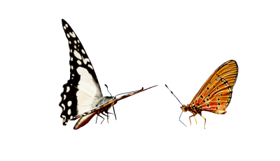 Nature, Animals, Butterfly, Insect, Flying, Wing, ProbeNature Animals Butterfly Insect Flying Wing Probe.png