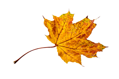 Autumn Leaves, Leaf png images, Leafs,  (6).png