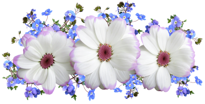 Flowers, White, And Blue, Floral, ArrangementFlowers White And Blue Floral Arrangement.png