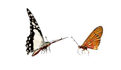 PNG images Butterfly (27).png