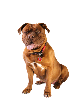 Dog-794781 PSD file with small and medium free transparent PNG images