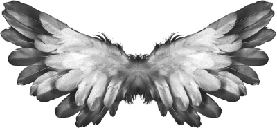 Angel, Wings, Feather, Heaven, Angel Wings, ReligionAngel Wings Feather Heaven Angel Wings Religion.png