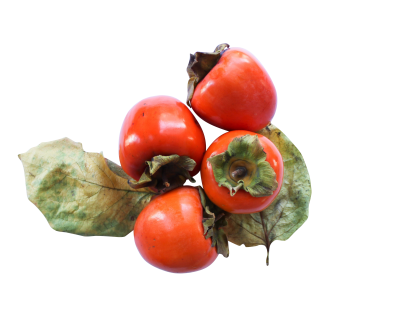 persimmon-1001802_Clip.png