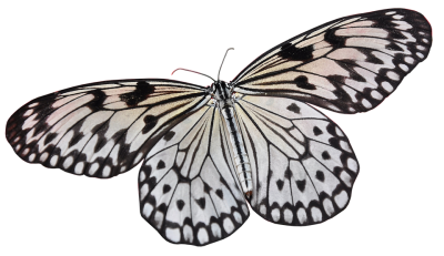 butterfly-3034481_960_720.png