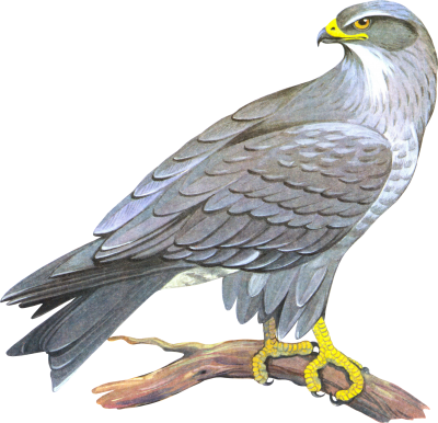 PNG images Falcon (2).png