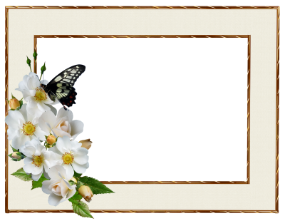 Frame, Border, White Rose, Butterfly, DecorativeFrame Border White Rose Butterfly Decorative.png