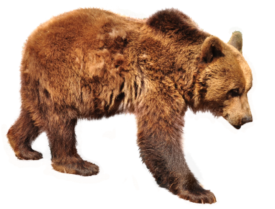 Bear, Brown Bear, Isolated, Nature, Animals, ForestBear Brown Bear Isolated Nature Animals Forest.png