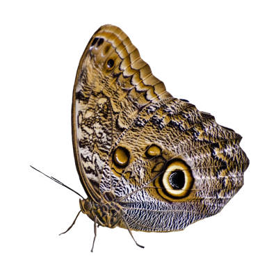 Butterfly-PNG-Image (1).png