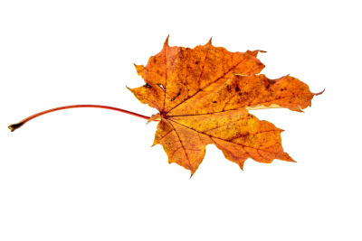 Autumn Leaves, Leaf png images, Leafs,  (7).png