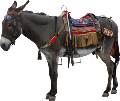 PNG images Donkey (22).png