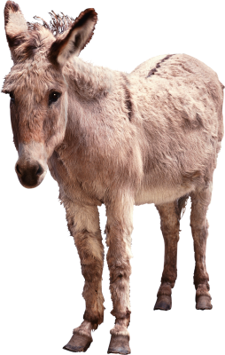PNG images Donkey (7).png