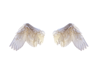 White Wings, Wings, Bird, Feathers, Freedom, Fly, PngWhite Wings Wings Bird Feathers Freedom Fly Png.png