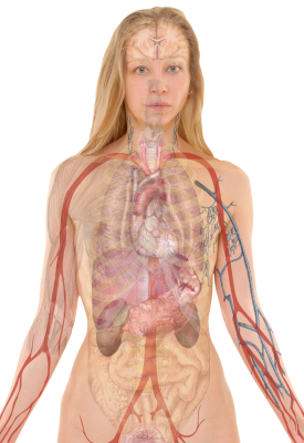 Anatomy-254120 PSD file with small and medium free transparent PNG images