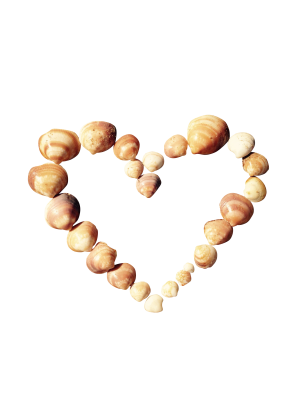 Heart-815168 PSD file with small and medium free transparent PNG images