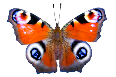 PNG images Butterfly (33).png