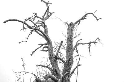 Isolated Tree, Cropping, Exemption, Isolated, Cut OutIsolated Tree Cropping Exemption Isolated Cut Out.png