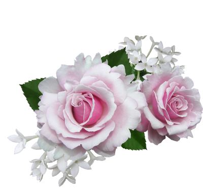Rose, Pink, With, White, FlowerRose Pink With White Flower.png