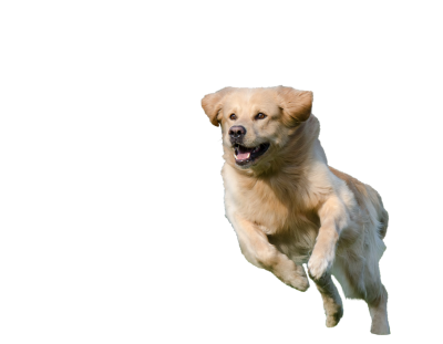 Running-dog-750588 PSD file with small and medium free transparent PNG images