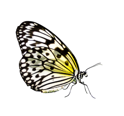 butterfly-3042353_960_720.png