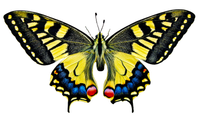 PNG images Butterfly (20).png