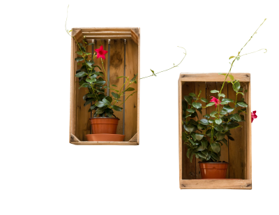 Flowerpot-935972 PSD file with small and medium free transparent PNG images