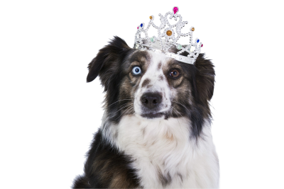 Dog-1273056 PSD file with small and medium free transparent PNG images