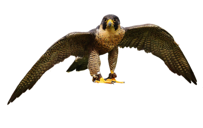falcon-2763616_960_720.png