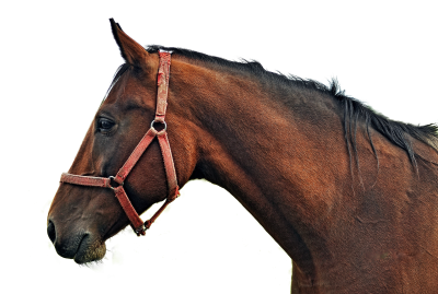 Horse, Isolated, Animal, Brown, Brown Horse, Ride, ManeHorse Isolated Animal Brown Brown Horse Ride Mane.png