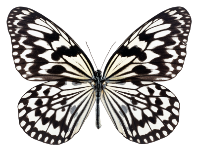 Butterfly, Fly, NatureButterfly Fly Nature.png