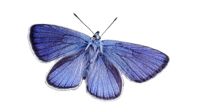 Butterfly, Blue, Nature, Blue WingButterfly Blue Nature Blue Wing.png
