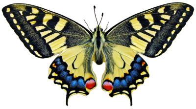 butterfly-3044121_960_720.png