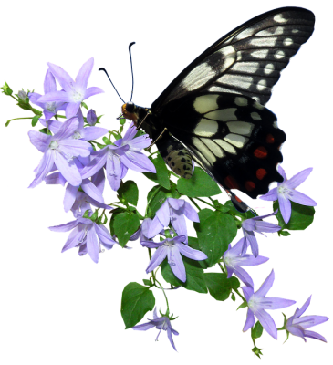 butterfly-3244808_960_720.png