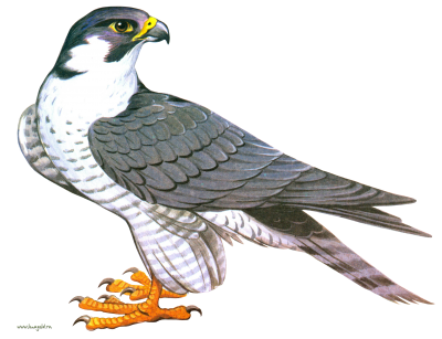 PNG images Falcon (23).png