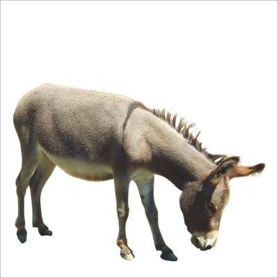PNG images Donkey (16).png