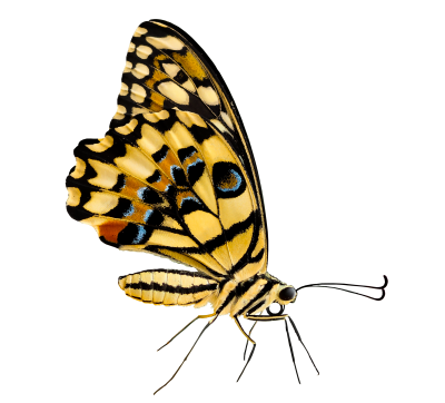 PNG images Butterfly (26).png