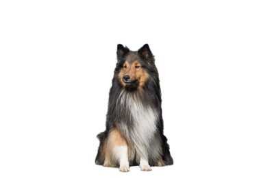 dog-1002029 PSD file with small and medium free transparent PNG images